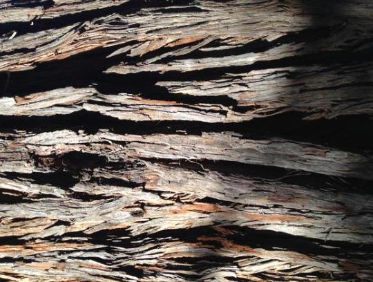 Photo of rough tree bark