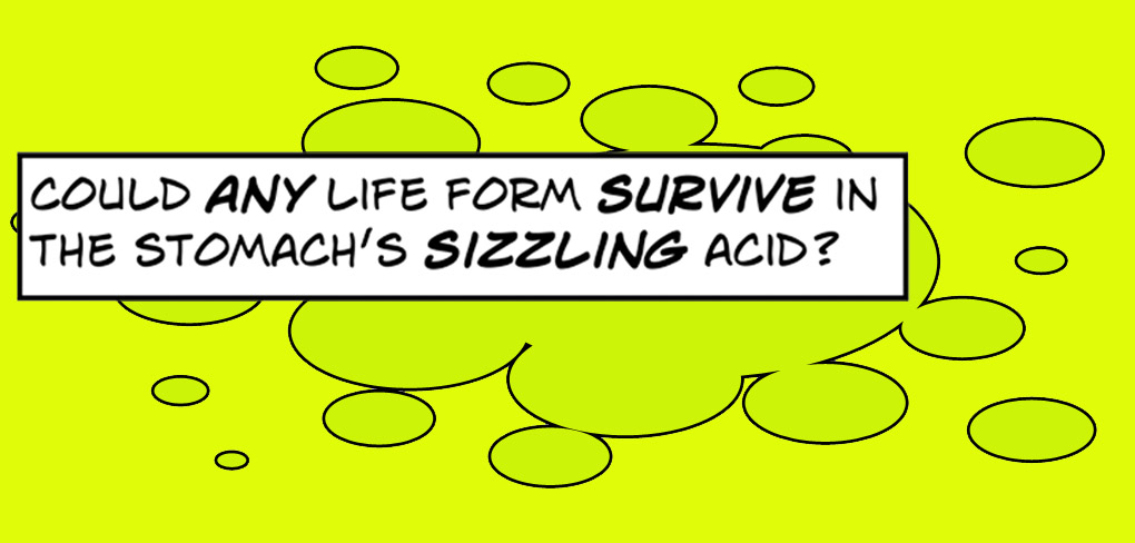 Could any life form survive in the stomach's sizzling acid?