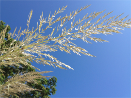 Photo of grasses against the sky