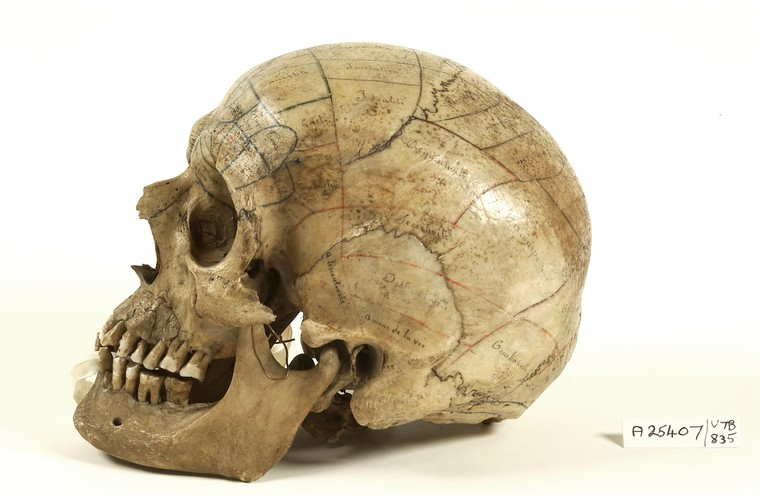 Human skull inscribed for phrenological demonstration, via Wellcome Collection